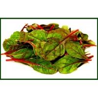 Ensalada de Acelgas Rojas Bandeja de 100 Gr (Italia)